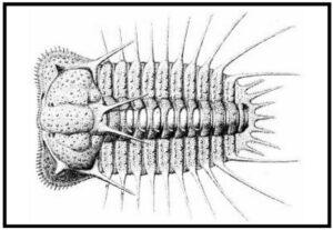 Figure 3: 2001 Trilobite Postcard